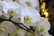 All - Orchid Romance by Andee Photography
