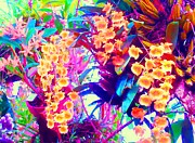Orchid Splash Print by Ann Johndro-Collins