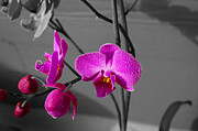 Featured Pyrography Acrylic Prints - Orchid Splash  Acrylic Print by Zachary Smith