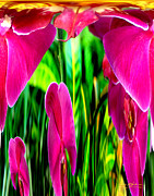 Purple Gladiolas Posters - Orchid Splat II Poster by Jeff McJunkin