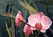 Trio Painting Posters - Orchid Trio Poster by Barbara Jewell