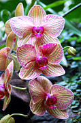Tiffany Dawn Smith - Orchid Trio