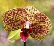 Rosanne Jordan - Orchid Wealth