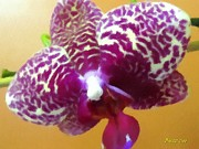 Photographs With Red. Prints - ORCHID White and Violet I Print by Buzz  Coe