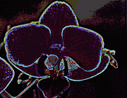Laurie Pike - Orchid with neon...