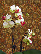 Deborah Johnson - Orchid with Tapestry