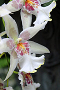Carolyn Stagger Cokley - Orchid2719