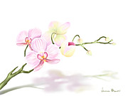 Flower Digital Art Posters - Orchidea Poster by Veronica Minozzi