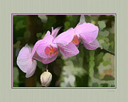 Beautiful Landscape Photos Digital Art Acrylic Prints - Orchids II Acrylic Print by Tom Prendergast
