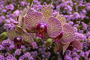 Pretty Orchid Photos - Orchids in pink flowers by Garry Gay