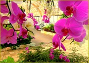 Mindy Newman Digital Art Posters - Orchids in the Garden Poster by Mindy Newman