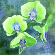 Joan A Hamilton - Orchids One