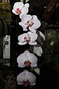 Flower Art - Orchids - US Botanic Garden - 011335 by DC Photographer