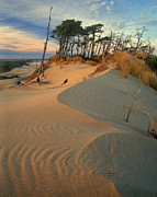 Oregon Dunes National Recreation Area Prints - Oregon Dunes National Recreation Area Oregon Print by Dave Welling