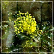 Nick Kloepping - Oregon Grape