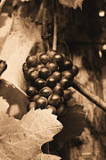 Sparkling Wine Framed Prints - Oregon Grapes Framed Print by Steven Baier