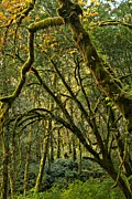 State Parks In Oregon Metal Prints - Oregon Rainforest Green Metal Print by Adam Jewell