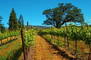 Blue Grapes Photos - Oregon Winery by Richard Jenkins