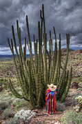 Travel Sightseeing Prints - Organ Pipe Cactus The Visitor 1 Print by Bob Christopher
