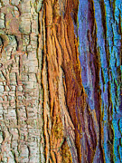 Colourful Bark Prints - Organic Bark Texture 11 Print by Hakon Soreide