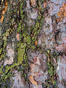 Lichen Photo Prints - Organic Bark Texture 3 Print by Hakon Soreide