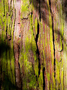 Colorful Bark Prints - Organic Bark Texture 6 Print by Hakon Soreide