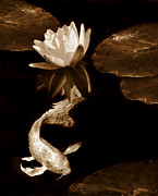 Koi Ponds Photos - Oriental Koi Fish and Water Lily Flower Sepia by Jennie Marie Schell