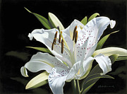 Isolated Pastels Prints - Oriental Lily Print by Paul Riccardi