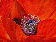 Oriental Poppy Print by Jo Appleby