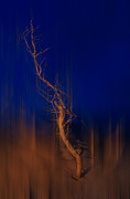 Metal Art Photography Posters - Origin of Man - a Tranquil Moments Landscape Poster by Dan Carmichael