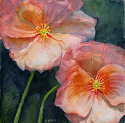 Salmon Painting Posters - Original Fine Art Watercolor Painting of Poppies Poster by Sarah Buell  Dowling