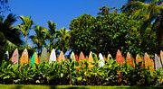 Photography Art - Original Surfboard Fence - Maui by Paulette Wright