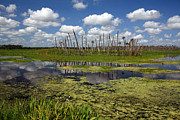 Florida Gators Posters - Orlando Wetlands Cloudscape 2 Poster by Mike Reid