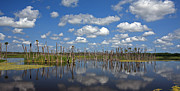 Florida Gators Posters - Orlando Wetlands Cloudscape 3 Poster by Mike Reid