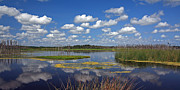 Florida Gators Posters - Orlando Wetlands Cloudscape 4 Poster by Mike Reid