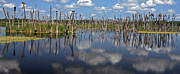 Florida Gators Prints - Orlando Wetlands Cloudscape 5 Print by Mike Reid