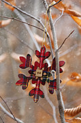 Sandra Cunningham - Ornament hanging on branch with snow falling