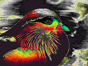 Merton Allen - Ornate Wood Duck Digital...