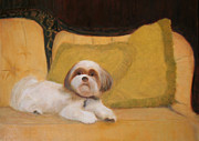 Shih Tsu Prints - Orso On His Throne Print by Christine Kohn