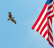 Sea Platform Prints - Osprey Flag Print by J H Clery