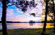 Randall Branham - Osprey leaving perch sundown lake