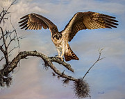 Eagles Art - Osprey on the branch by Zulfiya Stromberg
