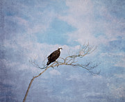 Bird On Tree Prints - Osprey on Tree Branch Print by Kim Hojnacki