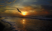 Topsail Island Posters - Osprey Sunrise Poster by Betsy A Cutler East Coast Barrier Islands