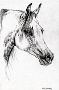 Horse Drawing Prints - Ostragon polish arabian horse 2 Print by Angel  Tarantella