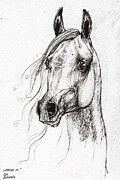 Horses Drawings - Ostragon polish arabian horse 3 by Angel  Tarantella