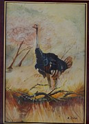 Framed Bird Prints Painting Prints - Ostrich Print by Andrick Jean