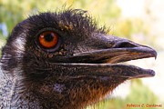Ostrich Photos - Ostrich Eye by Rebecca Christine Cardenas