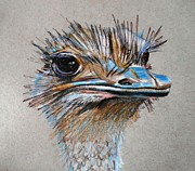 Neutral Drawings Posters - Ostrich Head Poster by Megan Melonas