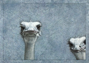 Blue Drawings - Ostriches by James W Johnson